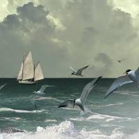 Sailboat,Seabirds, and Surf by I.M. Spadecaller