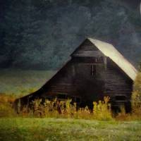 Luminous Night In the Pinelands Art Prints & Posters by RC deWinter