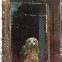 owl in building by r christopher vest
