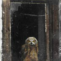 owl in bulding color pop by r christopher vest
