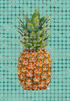 ORL-10069-1 Sea Pineapple