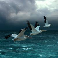 Pelicans at Tarpon Key by I.M. Spadecaller