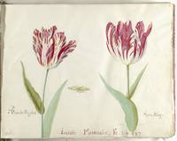 Twee tulpen, Jacob Marrel, 1637 - 1645