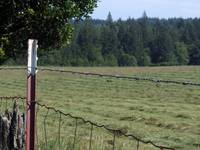 Meadow Barbed Wire Fence