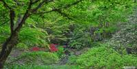 Yao Japanese Garden in Spring (with text caption)