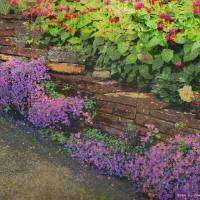 pathway garden flowers Art Prints & Posters by r christopher vest
