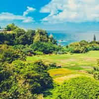 MauiLandscape gallery