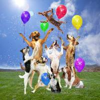 Dogs Celebrate in a Grassy Field Art Prints & Posters by Stephanie Roeser