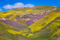 Layers of Color on the Carrizo - Superbloom 2017