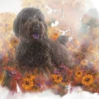 Labradoodle Art Prints & Posters by Rick Wooten