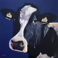 Friesen Cow