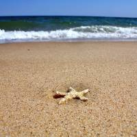 Cape Cod Starfish, Truro Art Prints & Posters by Christopher Seufert
