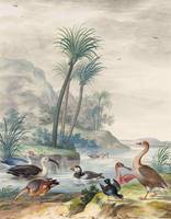 Johannes Bronckhorst, Exotic Waterbirds in a Lands