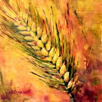 7 Fruits of Israel Series - Barley