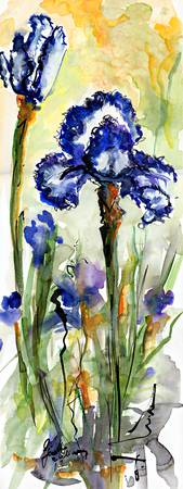 Blue Bearded Irises Watercolor and Ink