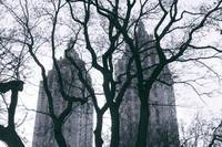 Urban NYC Buildings with Branches