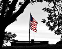 A Flag Among the Trees at Fort McHenry