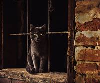 Black Cat Visiting Old Warehouse