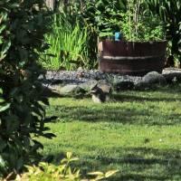 Squirrel in Backyard 086 by Richard Thomas