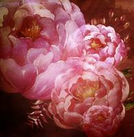 Peonies in Love