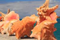 Conch Shells and Starfish, Nassau Bahamas