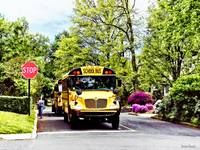School Buses At Stop Sign In Spring