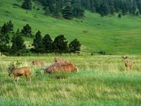 Z3 Deer in Boulder Colorado Foothills