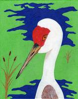 Sandhill Crane on Water