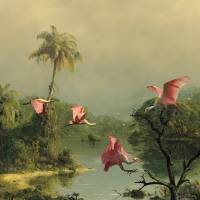 Spoonbills in the Mist by I.M. Spadecaller