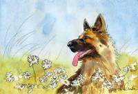 german shepherd art | dog painting | watercolor