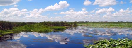 Skyscape Reflections Blue Cypress Marsh Florida C5