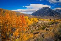 Changing Aspens at McGee Creek