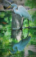 Water mirror bird