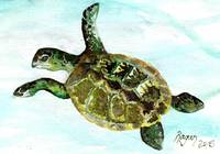TurtleTime-2015