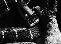 Black (and white) snake
