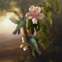 Violetear Hummingbirds and Trumpet Flower by I.M. Spadecaller
