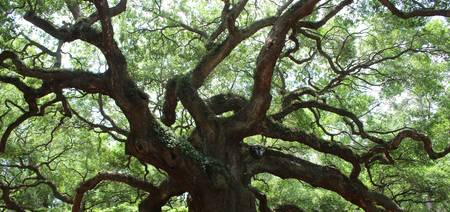 Angel Oak Panorama