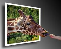 giraffe-w-browse-and-hand-OOB-8060137