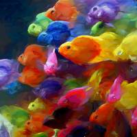 school of colorful fish Art Prints & Posters by Tom Sachse