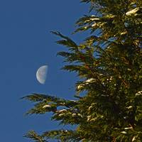 christmas-moon-tree-1421