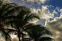 nassau-palms-n-clouds-1815