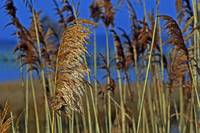 Marsh Grasses at Northside Park in Ocean City