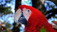 parrot-macaw-in-trees-0651