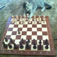 Kitty Chess Game