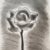 flower made in charcoal. Art Prints & Posters by Rannveig Ovrebo