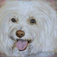 Bella the Maltese Art Prints & Posters by Yvonne Carter