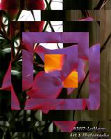 Abstract Bougainvillea