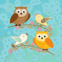 Birds and owls