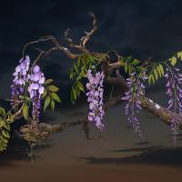 Cogan's Wisteria  by I.M. Spadecaller