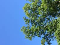 Tree in a Blue Sky